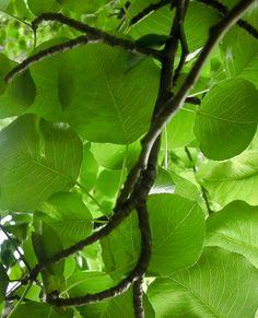 tree leaves :)