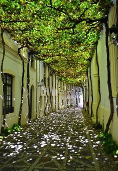 r/interestingasfuck - Shade on a street in Jerez, Spain Beautiful Streets, Beautiful Places, Beautiful Pictures, Pavillion, Timber Buildings, Backyard Makeover, Design System, Garden Structures, Interior Exterior