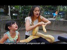 Safeea Anak Mulan Jameela Ngabuburit Di Gembira Loka Jogja @ Shafiyah Anak Jamilah (20 Juli 2014)  http://www.youtube.com/watch?v=KYKbyQzcmrE