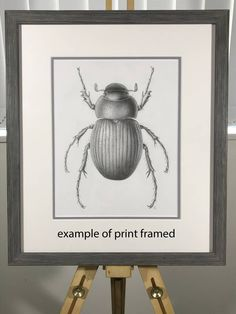 Limited edition giclee print of graphite drawing of Cromwell Chafer Graphite Drawings, Giclee Print, Artwork, Animals, Image, Work Of Art, Animaux, Animal, Animales