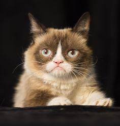 """Cat was so docile and kind,"" says Deutsch. (Robert Deutsch, USA TODAY) - Aug 2014 #GrumpyCat #Tard #TardarSauce / Pinned to the Grumpy Cat board here, http://www.pinterest.com/fairbanksgrafix/tard-the-grumpy-cat/"