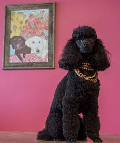 Meet therapy dog Tootsie and shop at Scout & Molly's to raise money for children's hospice. Therapy Dogs, Hospice, Event Calendar, How To Raise Money, Houston, Butterfly, Meet, Events, Crochet