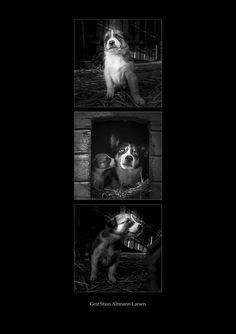 https://flic.kr/p/CjAhUs | husky puppies | It is what it is.. :)