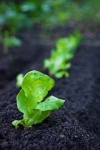 How to Prep Soil for a Vegetable Garden | Garden Guides