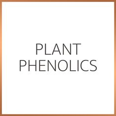Phenolic compounds are chemical compounds found in plant tissue. They are a promising tool in eliminating the causes and effects of skin ageing, disease and damage. Plant phenolics also exhibit potent antioxidant properties and help prevent oxidative stress. Plant Tissue, Oxidative Stress, Cause And Effect, Ageing, Exhibit, Science, Skin Care, Coming Of Age, Skincare