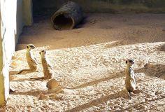 Taronga Zoo by Sands ~♥~,