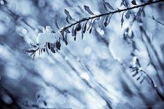 Iced bokeh - Frosty mornings II by Marc Benslahdine, via Flickr