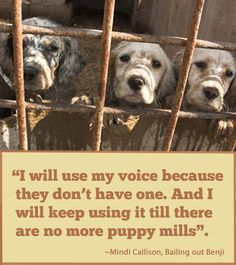 """I will use my voice because they don't have one. And I will keep using it till there are no more puppy mils"".  #bailingoutbenji #nomorepupymills #adoptdontshop"