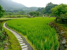 台北-金山無毒地瓜 融合在地農友施行自然農法耕植  From 大台灣旅遊網