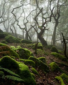 This is a surreal photograph of a leafless forest with beautiful foreground.