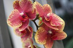Coajă de banane pentru orhidei! - Pentru Ea Garden Care, Vegetable Garden, Flowers, Wayfarer, Plant, Lawn And Garden, Yard Maintenance, Vegetables Garden, Vegetable Gardening
