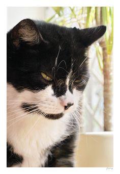 Schnuffel Katze | Pawshake