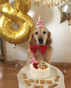 Dog Mom Discover Golden Retriever Dog Breed Information Nico Dog First Birthday, Puppy Birthday Parties, Puppy Party, Frozen Dog Treats, Dog Cakes, Homemade Dog Treats, Animal Party, Happy Dogs, Dog Mom