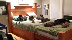 9-13-16-colossal-bed-for-eight-dogs5
