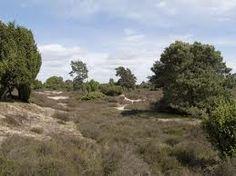 Natuurgebied Drouwenerzand