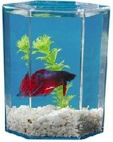 Betta Tank Aquarium Kit. Includes gravel,plant and air stone.  Get 3 people to Sign Up and Join this freebie and you get it!