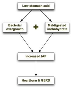 Research suggests that GERD is caused by maldigestion of carbohydrates and bacterial overgrowth in the intestines.