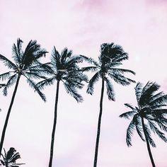 🌴 Palm tree sanctuary 🌴