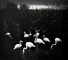 Here Far Away: The Visual Fables of Pentti Sammallahti - LightBox