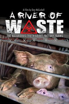 Factory farms cause immense harm to the environment.