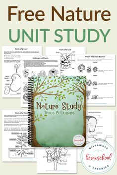 Have fun with this FREE Nature Study with Trees and Leaves Unit that lets you draw label color and more! Upper elementary and middle school students can learn about seeds plants leaves flowers and more. Free Homeschool Curriculum, Homeschooling Statistics, Online Homeschooling, Homeschool Books, Tree Study, Forest School, Nature Study, You Draw, Reggio