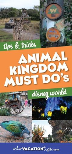 Don\'t be deceived by the name, Animal Kingdom is definitely NOT a zoo! This park is a beautifully landscaped, well laid out mixture of nature, animals, and rides. It\'s my favorite park to go and just walk around. The following is my list of Animal Kingdom must dos. #animalkingdom #disneymustdos