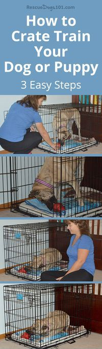 How to Crate Train Your Dog or Puppy in 3 Easy Steps #dogtrainingtips #dogtraining #dog #dogadopt #dogadoption #adoptadog #dogstuff #puppytraining #puppytrainer #dogtrainer #cuteanimals #dogstuff #puppy #puppylove