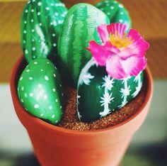 Laurdiy's cacti