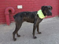 SAFE --- Brooklyn Center   LISA - A0997448  *** SAFER: AVERAGE HOME ***   FEMALE, BR BRINDLE, PIT BULL MIX, 2 yrs  STRAY - STRAY WAIT, NO HOLD Reason STRAY  Intake condition NONE Intake Date 04/22/2014, From NY 11433, DueOut Date 04/25/2014  https://www.facebook.com/photo.php?fbid=792813250731556&set=a.792353347444213.1073743116.152876678058553&type=3&theater