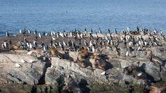 Animais nas ilhas do Canal de Beagle - Ushuaia, Argentina. Casal Gomes pelo mundo!  Encontre-nos nas redes sociais: Facebook: https://www.facebook.com/pages/VTL-Virtual-Tour-by-Luziete/289581344561316 Twitter: @VTLbyluziete Pinterest: virtualtourbyLuziete Instagram: @virtualtourbyluziete