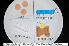 Butterfly Life Cycle - for those Band-Aid crazy pre-schoolers! Kindergarten Science, Preschool Curriculum, Preschool Lessons, Science Activities, Preschool Activities, Life Cycle Craft, Insect Crafts, Butterfly Life Cycle, Chickadees