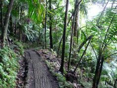 El Yunque National Forest Hiking