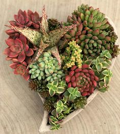 We heart succulents all year long. How about you? Nevertheless, we absolutely adore this heart-shaped Valentine's Day planter designed by our teammates at OASIS Water Efficient Gardens in San Diego County.
