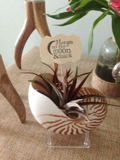 "5-6"" Natural Nautilus Shell with 2 Tillandsia Abdita Air Plant with Stand & Tag  #MooreCreative"