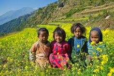 in Nepal, Tamang children playing in a field of mustard flowers.
