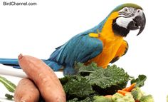 10 ways to present healthy foods that will get your birds going beak-first into their food bowls.