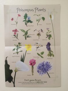 Poisonous Plants: This poisonous-plant poster shows the dangerous beauties that are native to California, USA. **Says CA but poisonous anywhere. Deadly Plants, Poisonous Plants, Edible Plants, Poison Garden, Plant Identification, Wild Edibles, Kraut, Gardening Tips, Gardening Supplies