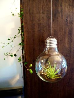 light bulb terrarium...ah ha!
