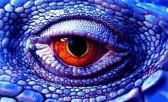 Image detail for A Lizard Eye Becomes a Photo of a Dragon - 7 Photography . Les Reptiles, Reptiles And Amphibians, Beautiful Eyes, Animals Beautiful, Animals Amazing, Lizard Eye, Reptile Eye, Eye Close Up, Photoshop Me