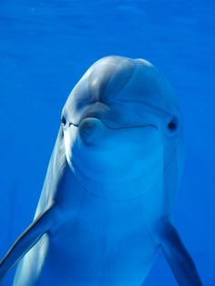 Dolphin --among the few very intelligent animals in the animal kingdom.
