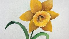 watercolour daffodils - YouTube