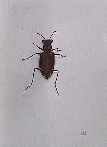 Beetle by José Carrilho Artist Art, Beetle, Insects, Animals, Funny, June Bug, Animales, Animaux, Bugs