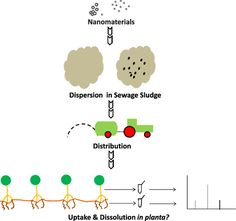 [ASAP] Determination of Nanoparticle Uptake, Distribution, and Characterization in Plant Root Tissue after Realistic Long-Term Exposure to…