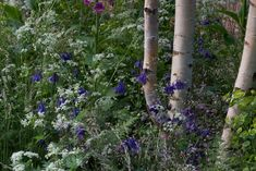 Hartley Botanic RHS Chelsea Flower Show 2016