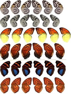 Free clipart.  Very detailed pairs of butterfly wings.