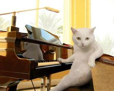 (I don't always play in piano bars. But when I do I see a lot of cute kitties.) 為你彈一曲