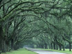 Georgia. I love plantation homes, and these tree-lined drives. Can you imagine going down this street to your home every day? Wow.