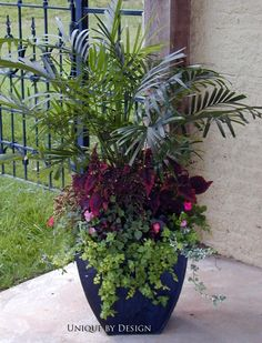 I love the height variation adds character. Beautiful arrangement More I love the height variation adds character. Outdoor Flowers, Outdoor Planters, Garden Planters, Outdoor Gardens, Porch Planter, Container Flowers, Container Plants, Container Gardening, Shade Plants