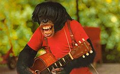 ROCKER CHIMP  Part of the Chimp show, which is performed hourly at Miami's Monkey Jungle.