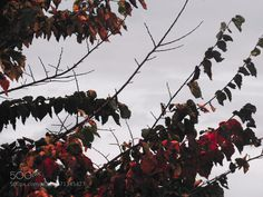Autumn Leaves by Ethical